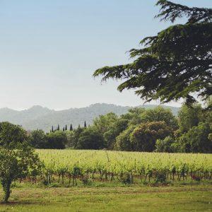 Château La Gordonne, harmonie en sols