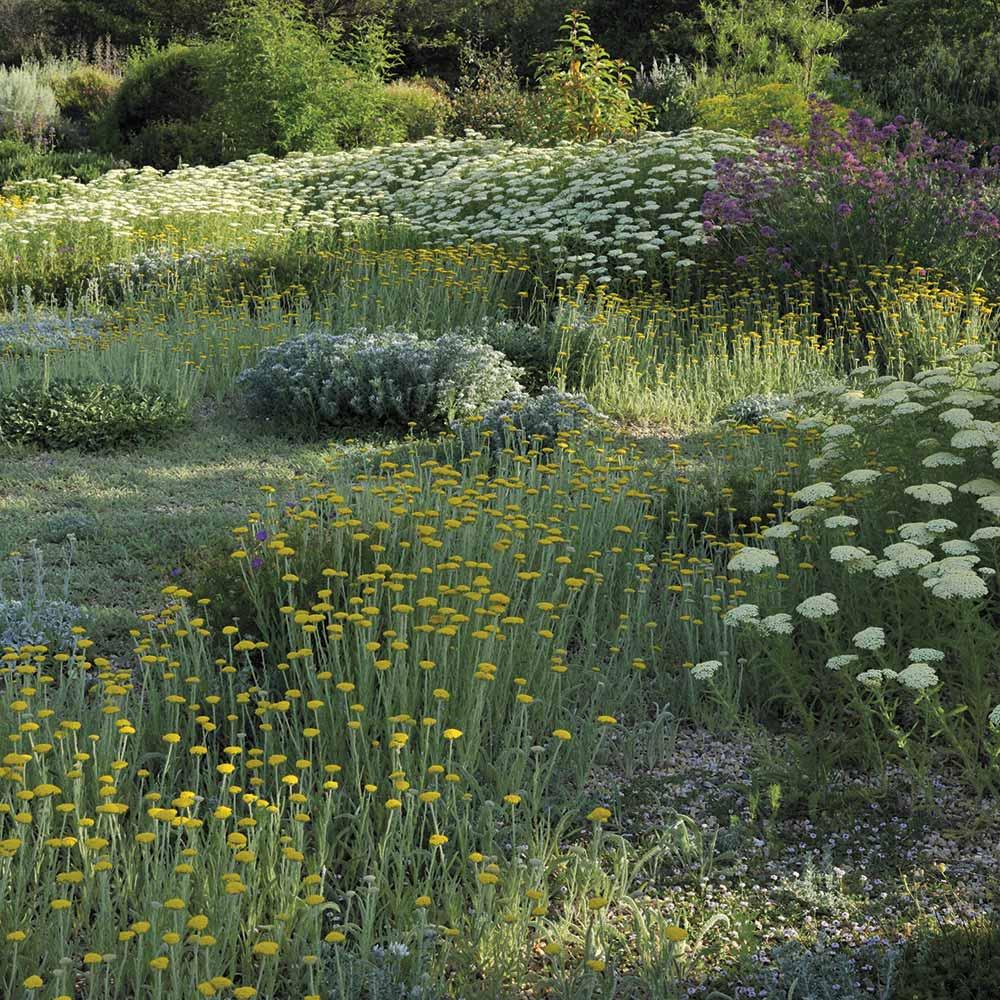 Plante Méditerranéenne Sans Arrosage idées nature : un jardin sans eau, c'est possible