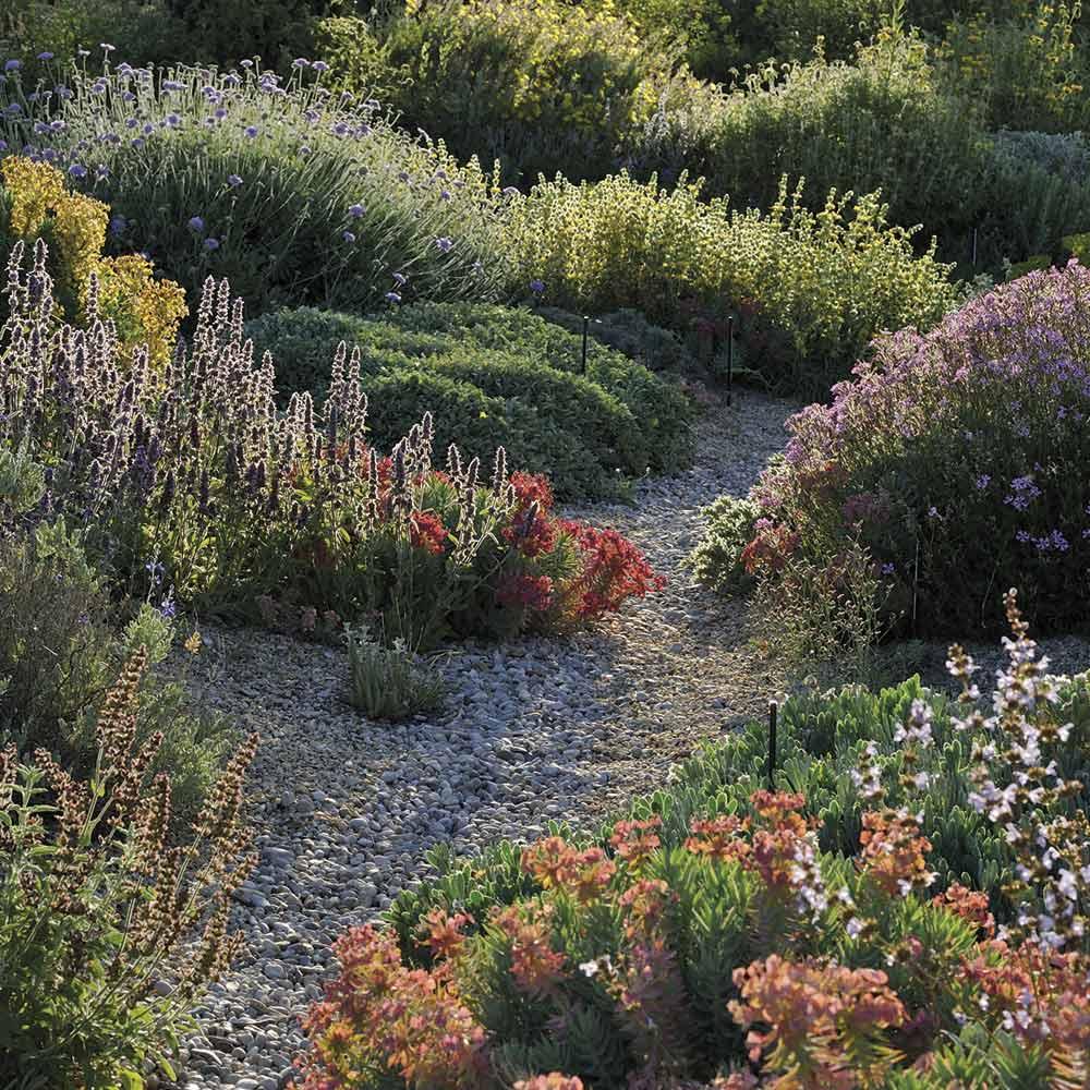 Idées nature : un jardin sans eau, c'est possible