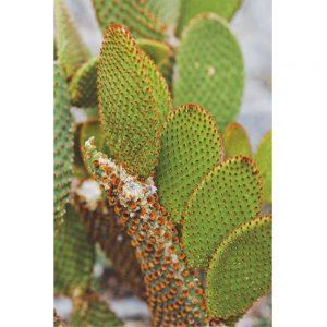 Le monde entier... est un cactus