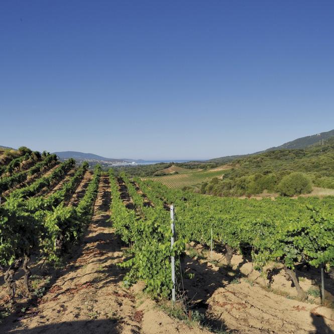 corse-domaine-viticole-Sant'Armettu_Stef_Bravin