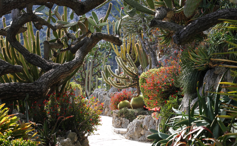 le jardin exotique de monaco un jardin d exception entre ciel et mer. Black Bedroom Furniture Sets. Home Design Ideas