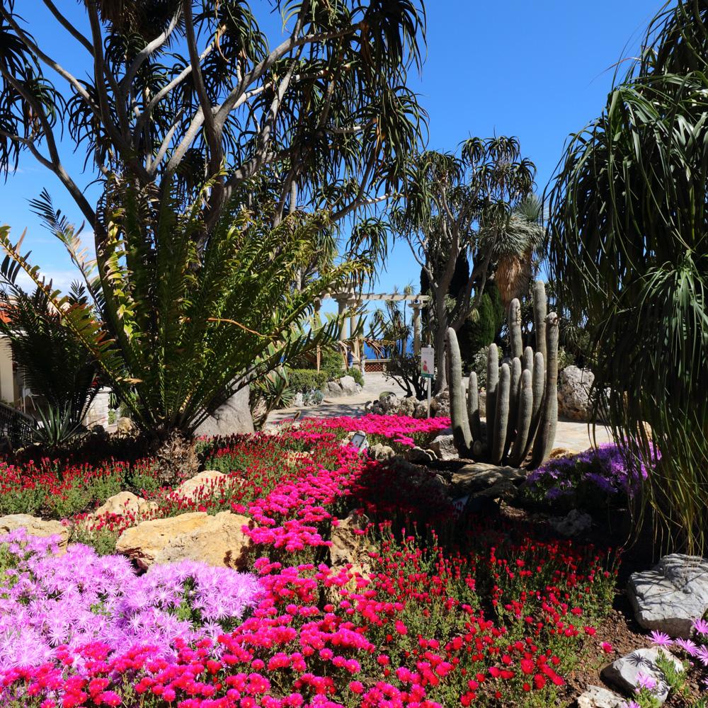 Le jardin exotique de monaco un jardin d exception entre ciel et mer - Jardin exotique sale nice ...