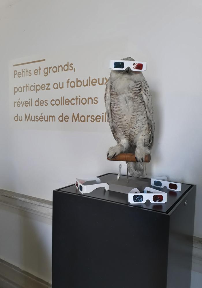 museonerique-museum-histoire-naturelle-marseille-1