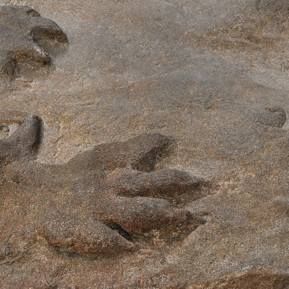 culture-sud-musee-lodeve-Contre-empreintes-reptile©PhilippeMartin