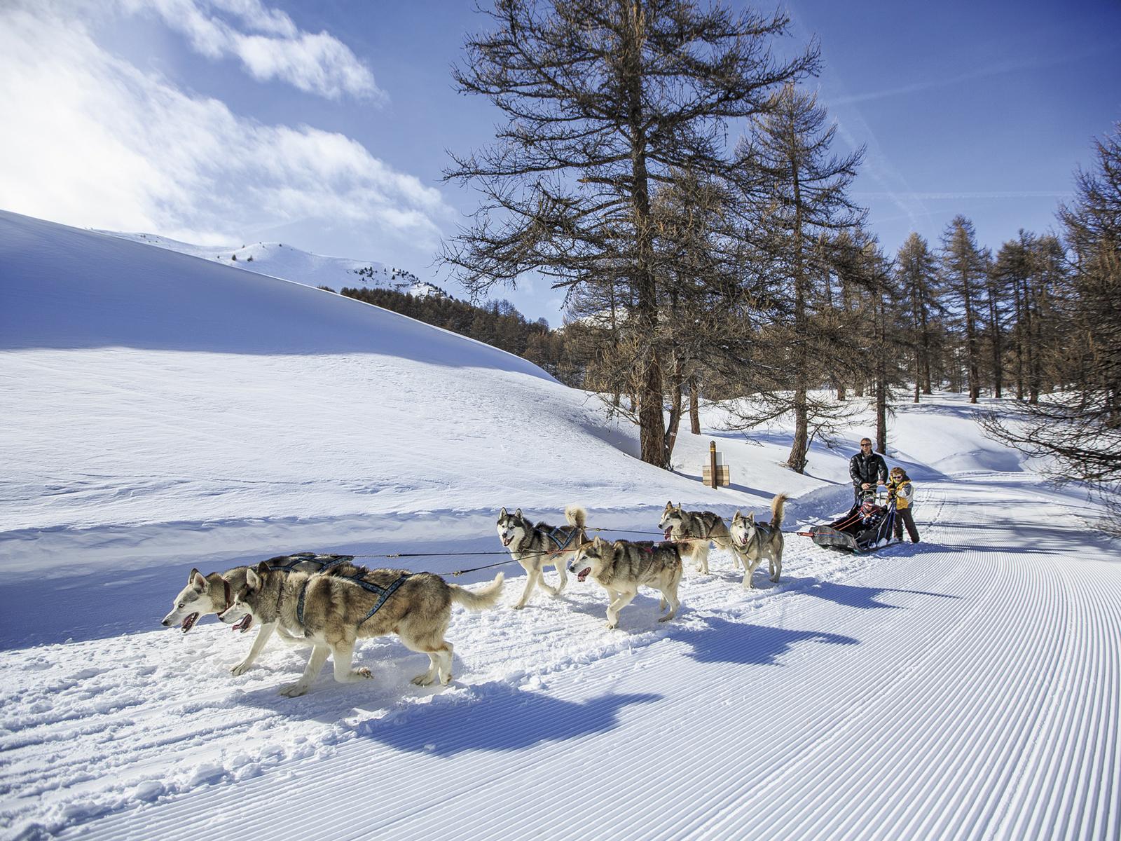 sur-les-pistes-de-ski-vars-la-foret-blanche-balade-en-chien-de-traineau-www-scalpfoto-com