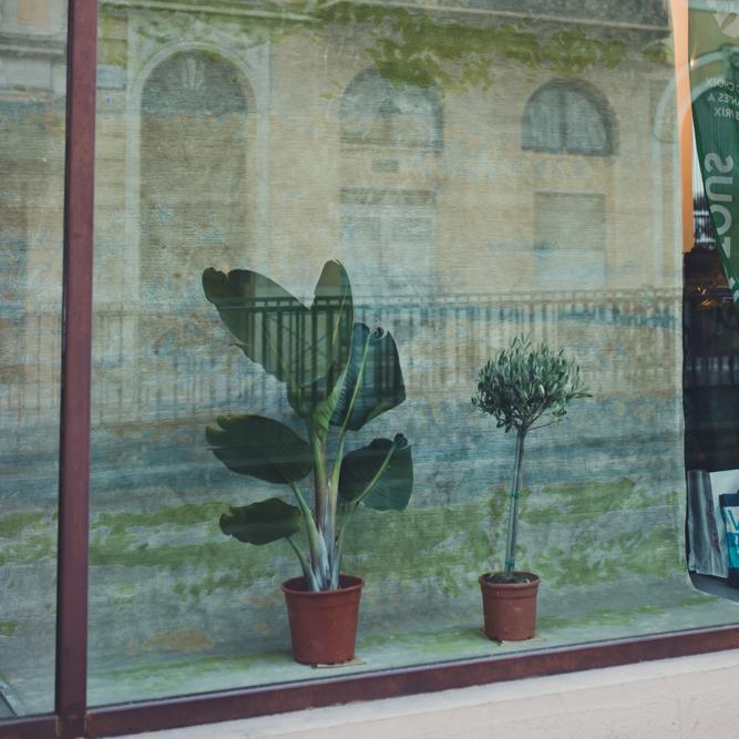 plantes-pour-tous-edition-bougainville
