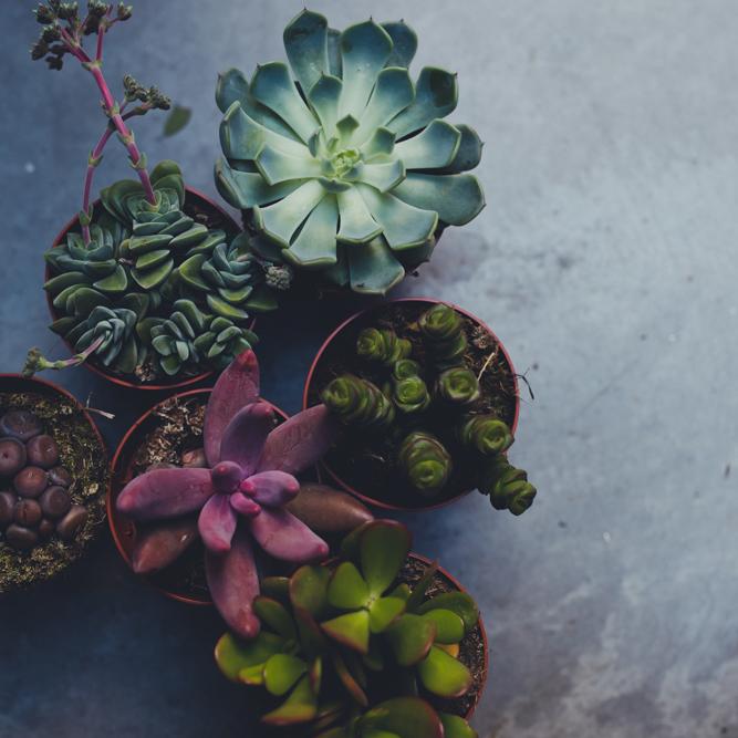 plantes pour tous nice janvier 2019 le dojo
