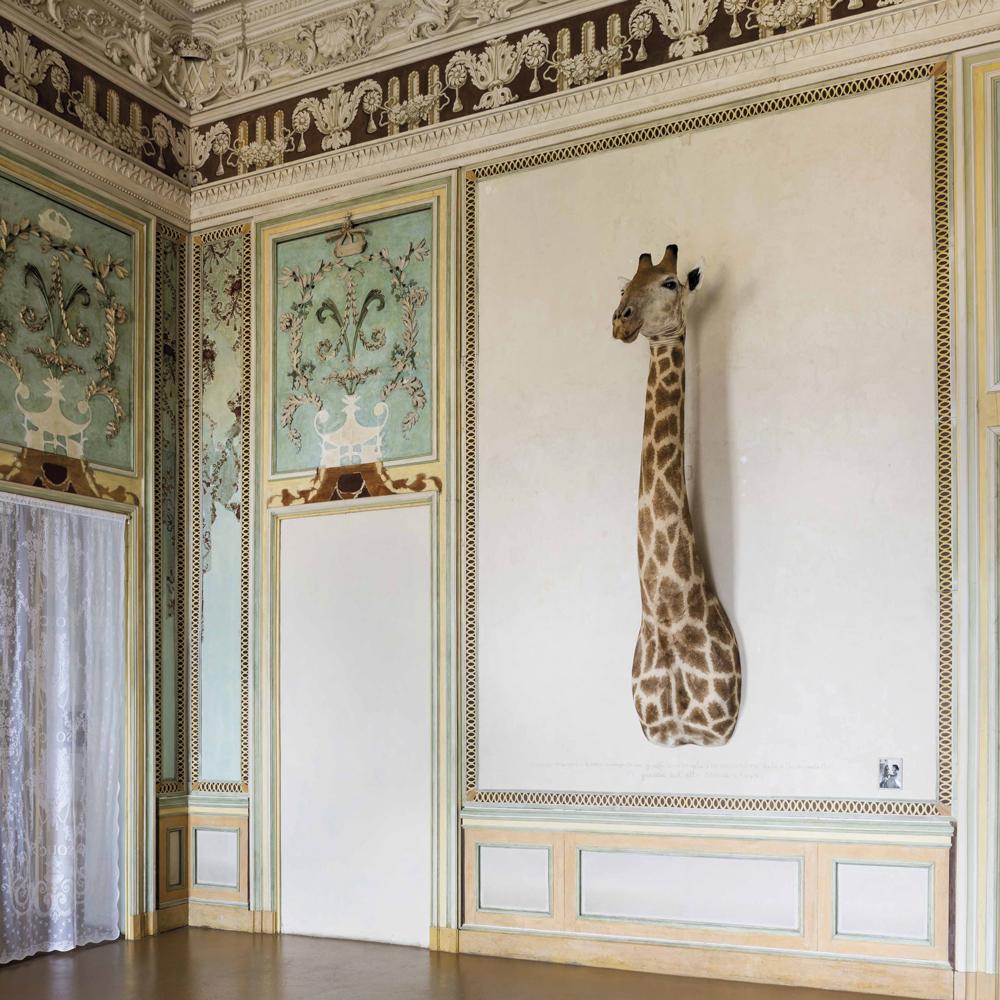 culture-saison-mars-sophie-calle-rachel-monique-girafe-exposition-madre-castello-di-rivoli-turin-galerie-perrotin
