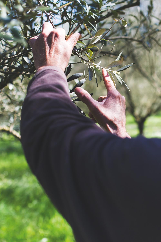 SAINT-TROPEZ racines du mythe-Éric-Barnéoud olivier