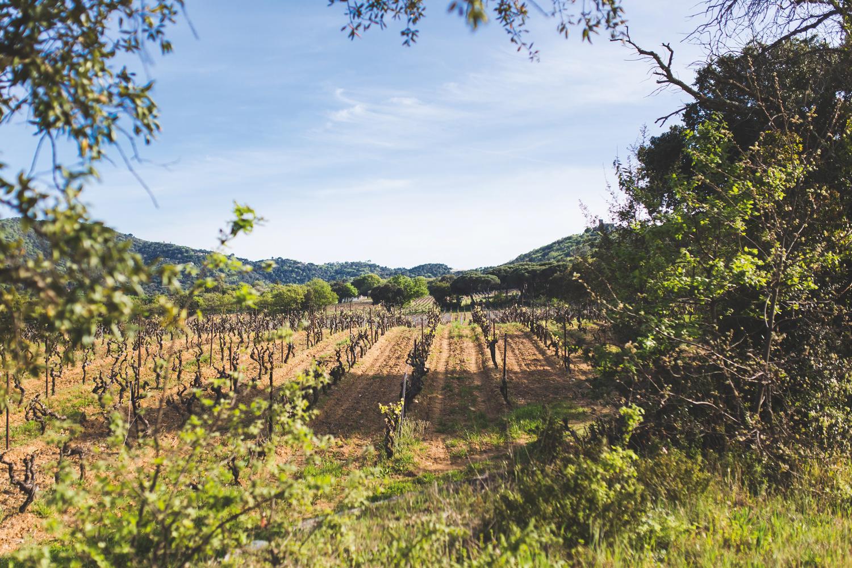 SAINT-TROPEZ racines du mythe-Vignes