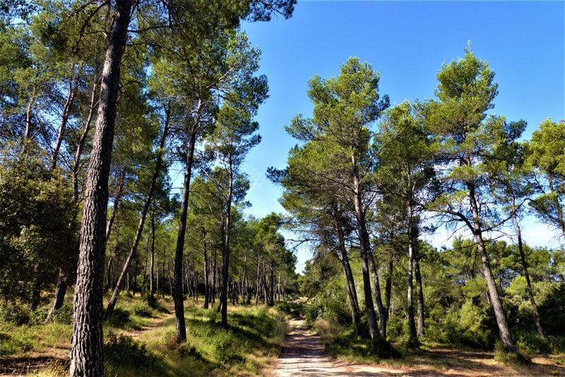 Chemins-des-parcs-naturels