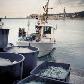 CCItalienne-Ligurie-La-Spezia-Bateaux-de-pêche-golfe